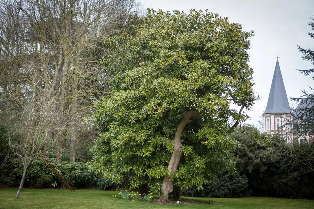 10 arbres rustiques a planter