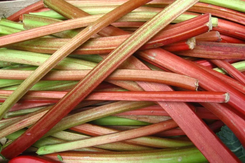 """Résultat de recherche d'images pour """"rhubarbe"""""""