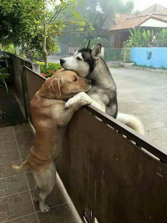 True love knows no fences