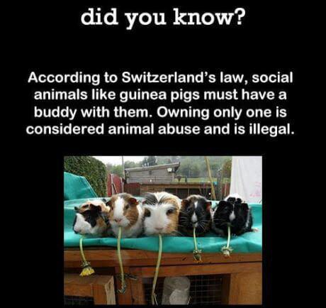 Nice Swiss people