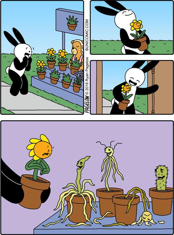 My gardening skills