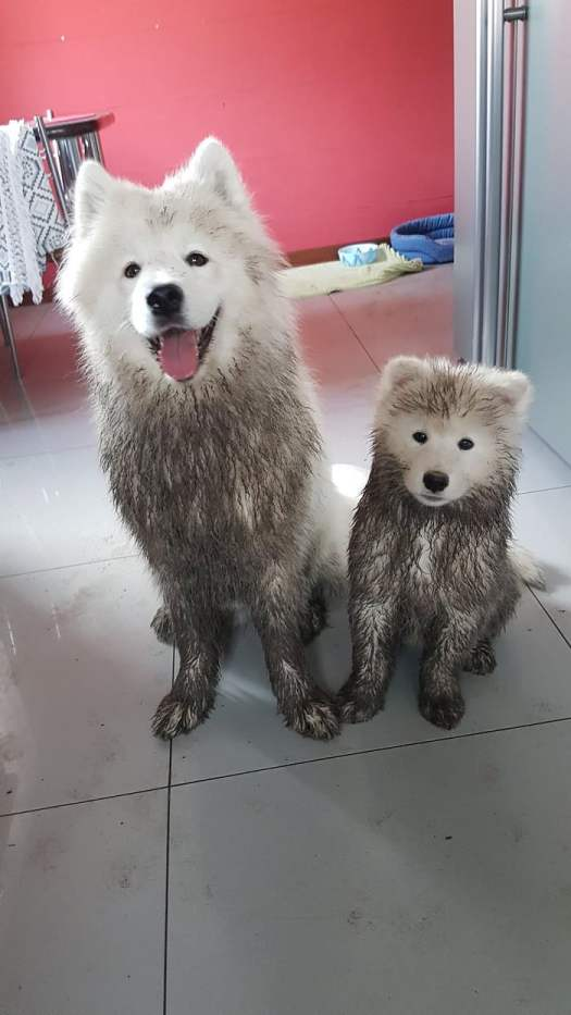 Dirty Dogs.