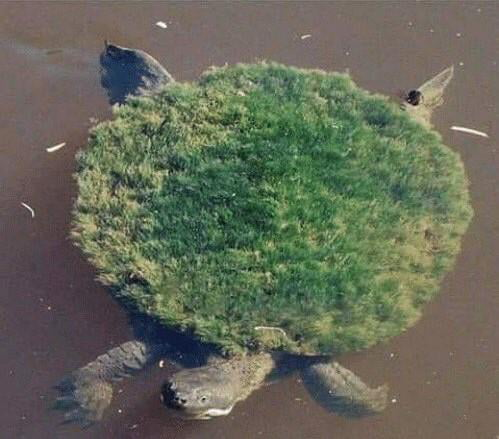 First picture of Earth from space (1972)
