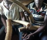 poachers-arrested-WCS