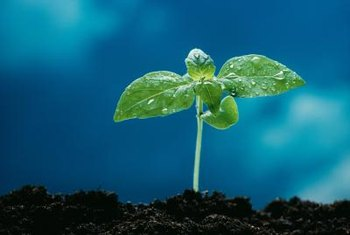 Are you in a season of starting over? Out of the dirt, new plants are formed. You can blossom too!