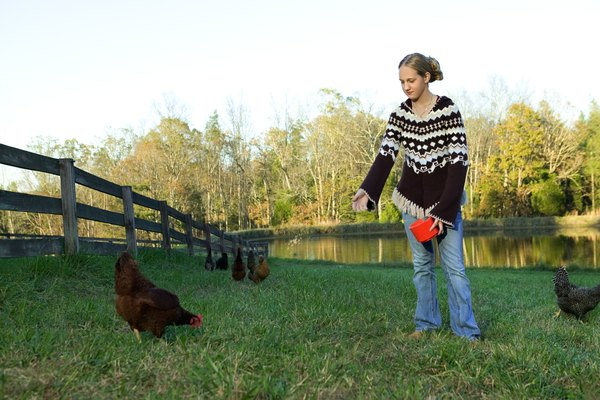 A girl stands in the yard feeding chickens.