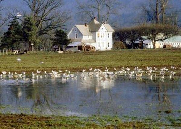 Walleye Farm Ponds