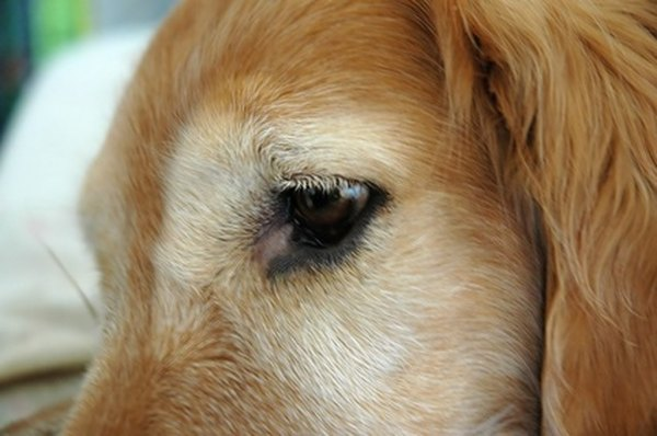 Conjunctivitis Is Among Eye Conditions That Require Antibiotics