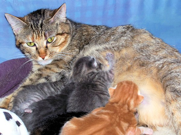 Why Would A Cat Stop Nursing Its Kittens Pets