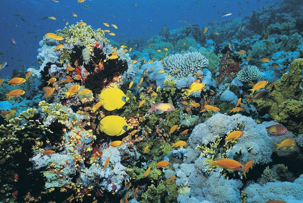 Fish on Shark Reef, Egypt.