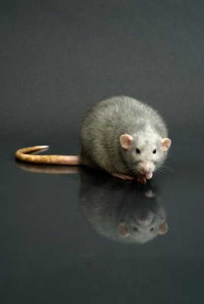 The Effects Of Rat Poison On Dogs Amp Cats Pets