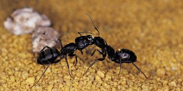 Image Titled Kill Cockroaches Or Ants Without Pesticide Step 3