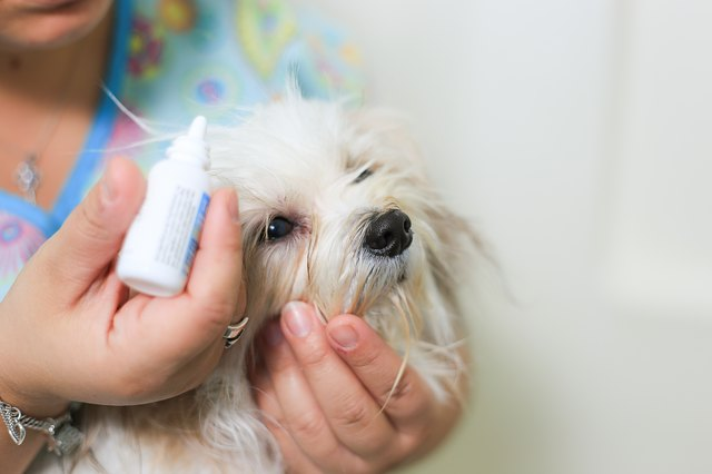 How To Kill Fleas Instantly On A Dog With Pictures EHow