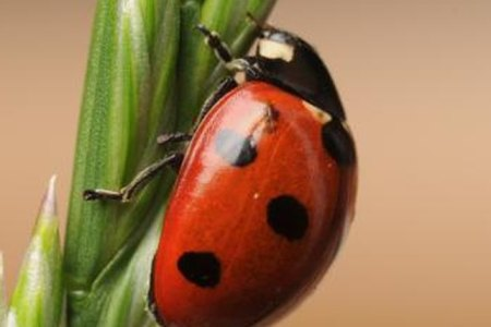 What Are Ladybugs A Sign Of 4k Pictures 4k Pictures Full Hq