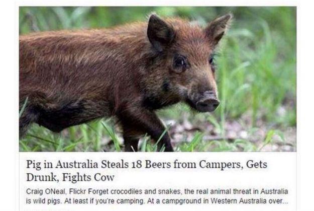 Only In Australia 18