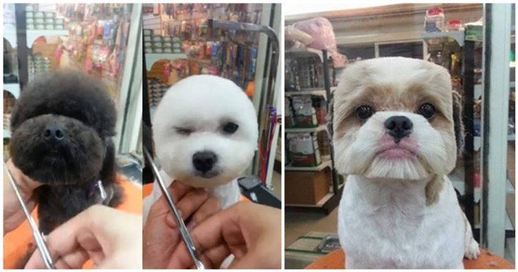 Taiwan Sets The Trend Stylish Haircuts For Your Dog