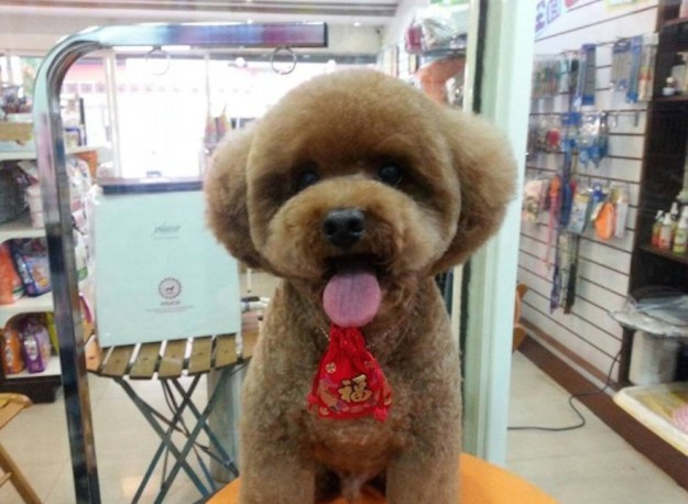 Round and Square dog hairstyles 7