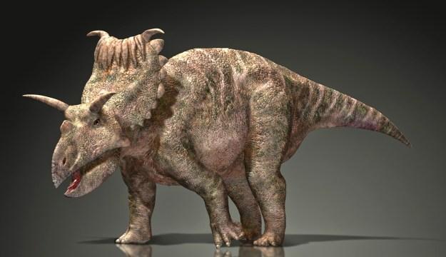 12) Kosmoceratops