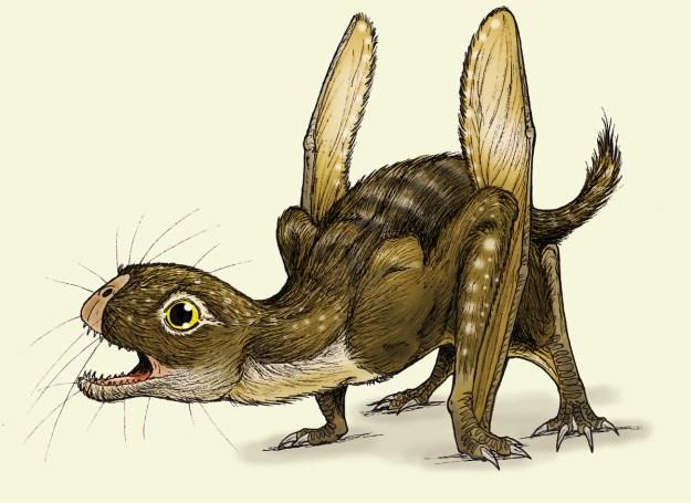 6) Jeholopterus