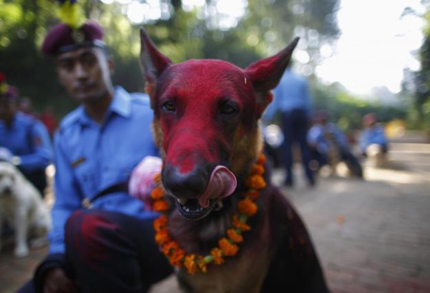Nepal's Festival To Celebrate Dogs 5
