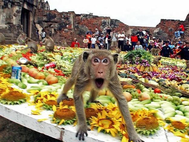 The Monkey Buffet Festival In Thailand 1