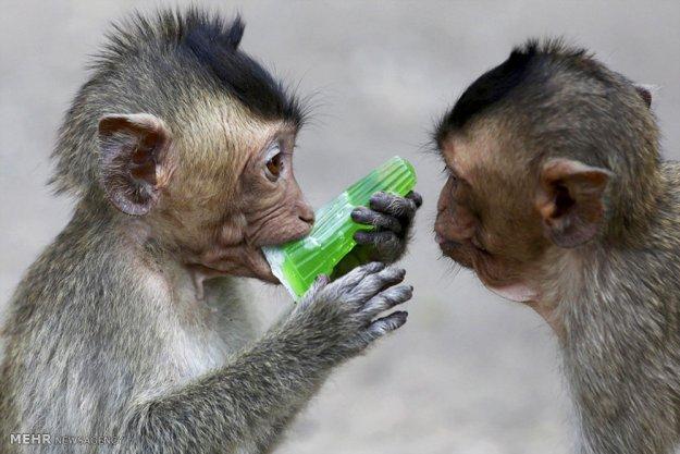The Monkey Buffet Festival In Thailand 7