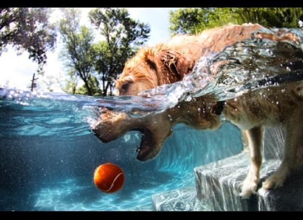 Underwater Dogs By Seth Casteel 11