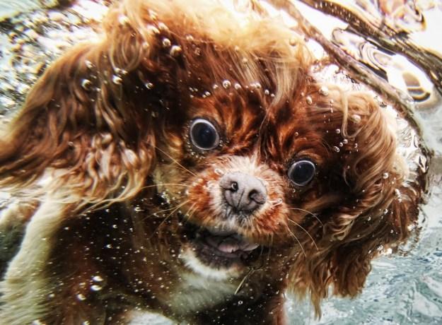 Underwater Dogs By Seth Casteel 15
