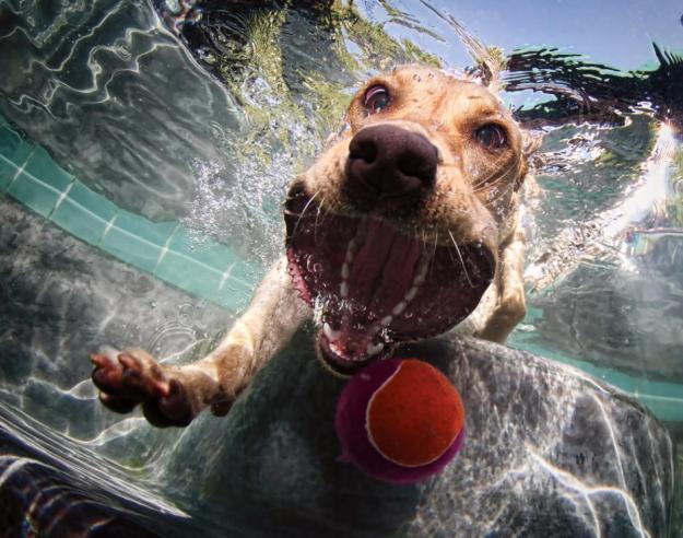 Underwater Dogs By Seth Casteel 16