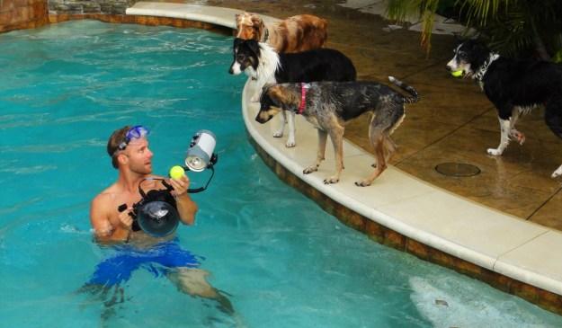 Underwater Dogs By Seth Casteel 18