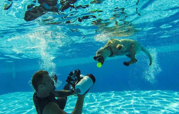 Underwater Dogs By Seth Casteel 21
