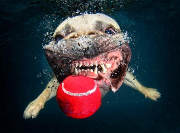 Underwater Dogs By Seth Casteel 3
