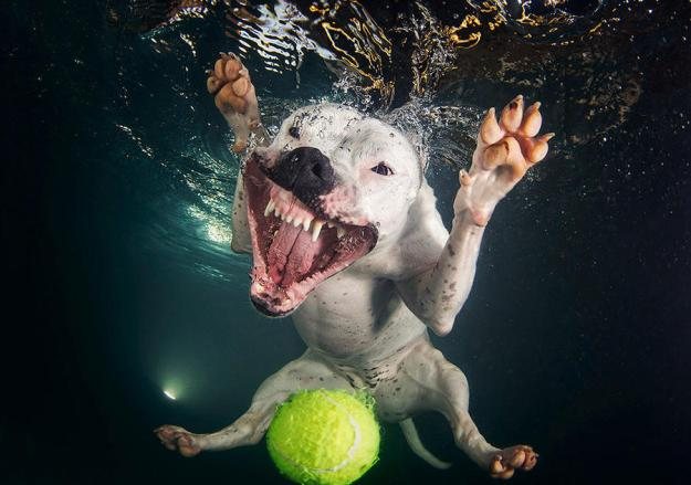 Underwater Dogs By Seth Casteel 8