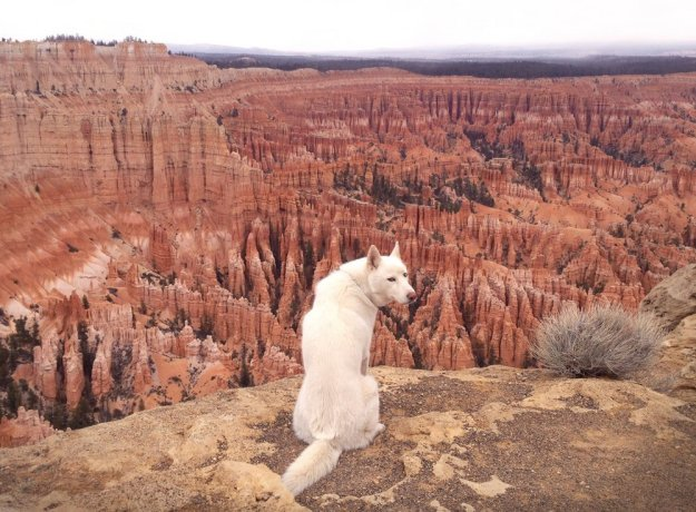Alone With 53 Thousand Followers- Incredible Adventures Of John Stortz And His Dog 2