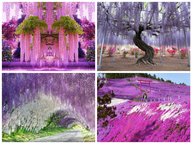 14 Mind-Blowing Examples of Alien & Beautiful Nature 31