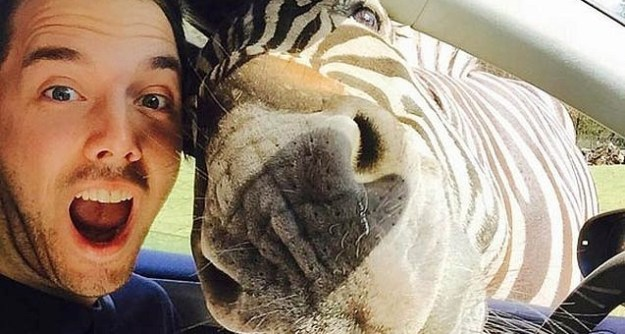 Snapping Selfies with Wild Animals Is a New Trend 10