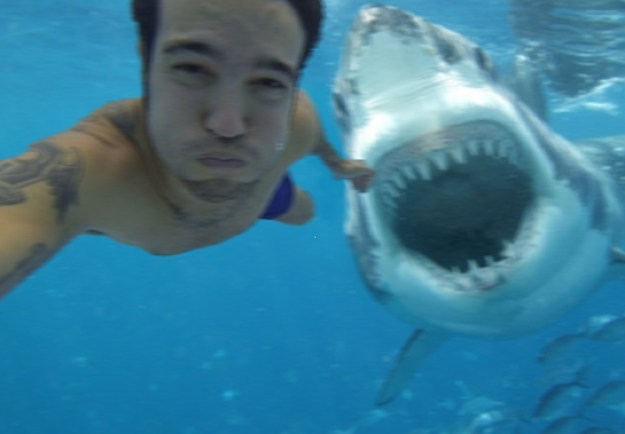 Snapping Selfies with Wild Animals Is a New Trend 14