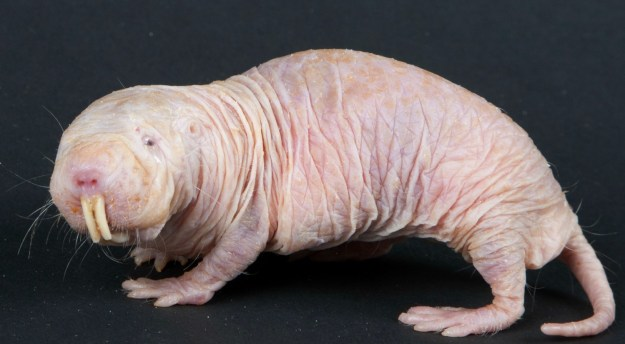 15 of The Most Terrifying Animals You Never Knew About 10