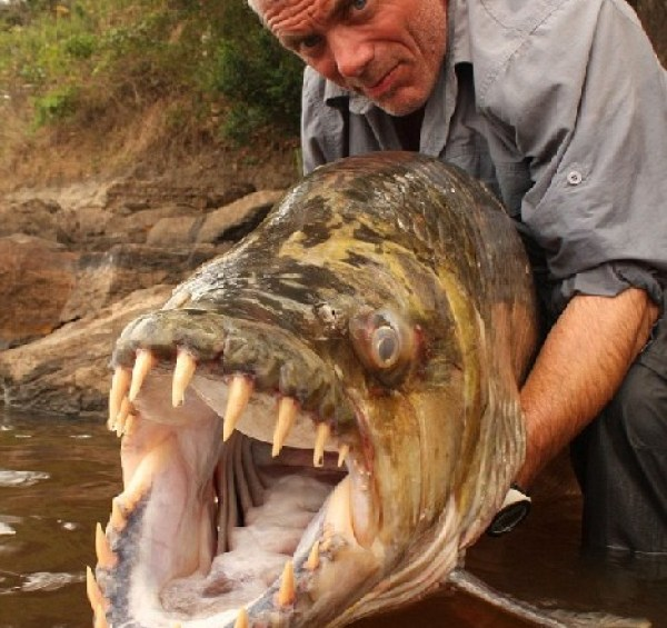 15 of The Most Terrifying Animals You Never Knew About 27