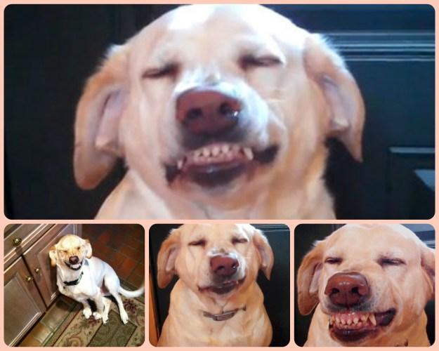 most-popular-internet-dogs-06