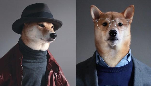 most-popular-internet-dogs-09