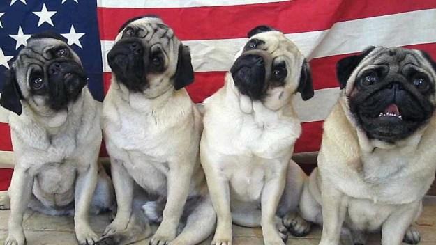 most-popular-internet-dogs-13