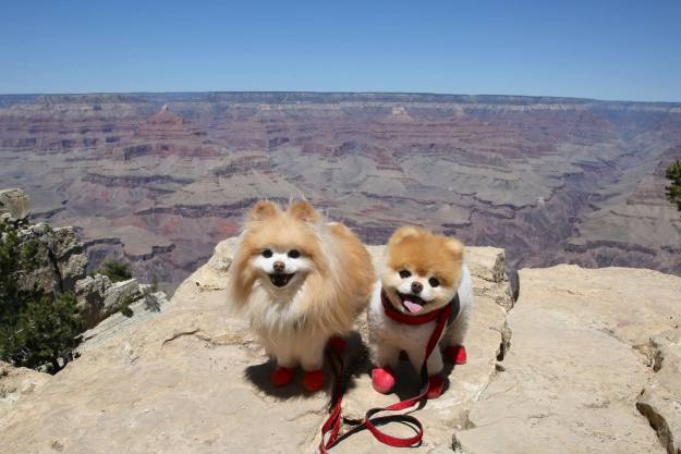 most-popular-internet-dogs-25