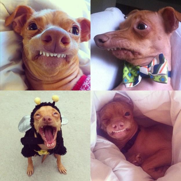 most-popular-internet-dogs-26