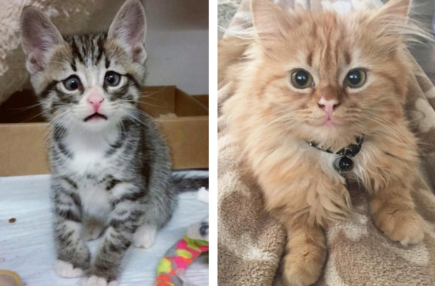 these_two_kittens_are_polar_opposites_but_theyll_steal_your_heart_01