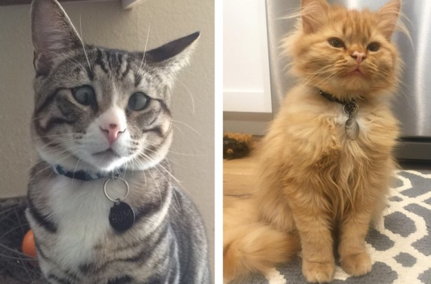 these_two_kittens_are_polar_opposites_but_theyll_steal_your_heart_07