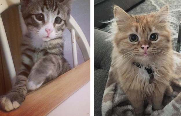 these_two_kittens_are_polar_opposites_but_theyll_steal_your_heart_08