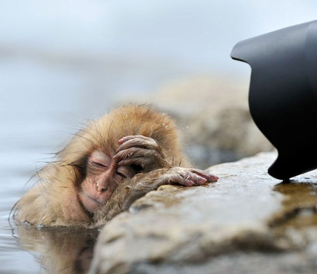 poor-animals-that-had-too-much-to-drink-last-night-03