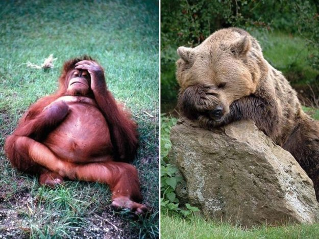 poor-animals-that-had-too-much-to-drink-last-night-08