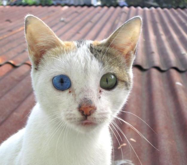 Beautiful Mutations 15 Staggering Photos of Heterochromia10
